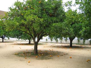 Escola das laranjeiras