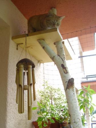 paradis express: Jardin de chats / Garden of cats