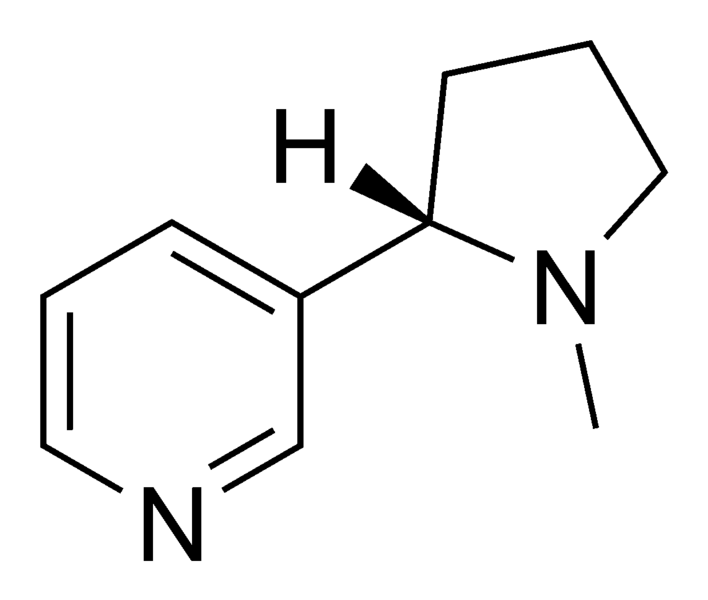 Botaniczna Galaktyka: Mapacho
