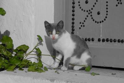 chat noir et blanc en couleur