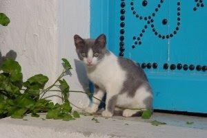 chat noir blanc couleur