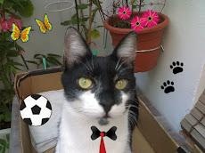 House el Gato !!!
