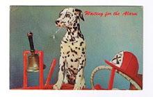 O meu primeiro postal com um cão