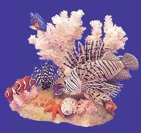 Ocean decor table display