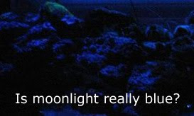 Should an aquarium moon light be blue