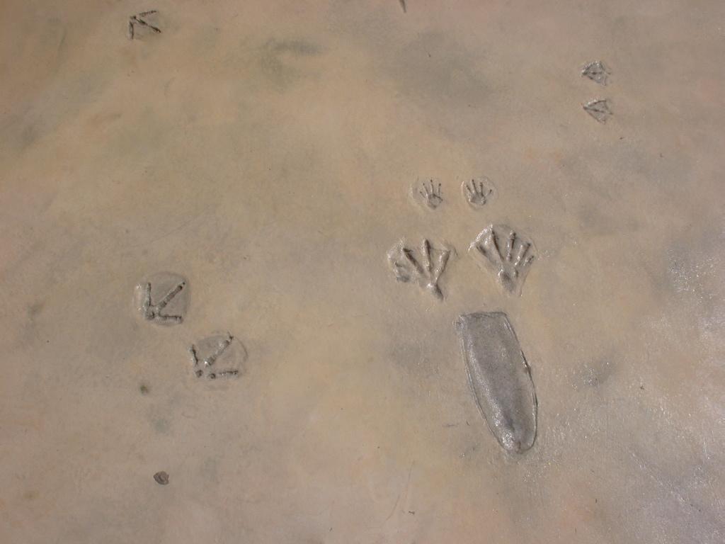 http://1.bp.blogspot.com/_pve5hst7Y_o/RdhzGKwqW-I/AAAAAAAAAKs/XA0JfTJCf3I/s1600/Beaver%2Bfootprints.jpg