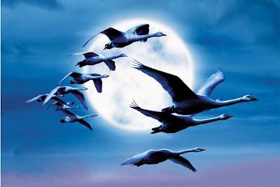 http://1.bp.blogspot.com/_pwb5ljtyJkY/SK8S8FULtdI/AAAAAAAAAYA/ybi9CVxANBc/s400/aves(1).jpg