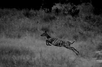 Parque Nacional da Gorongosa, Moçambique, 2008