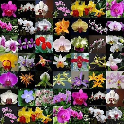 VENEZUELA : Orquídeas como me gusta..Asesoria Inmobiliaria 5804123605721