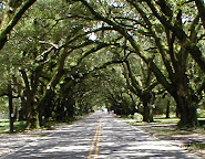 Tree Tunnel in South Carolina