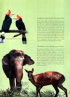 Wildlife Folder
