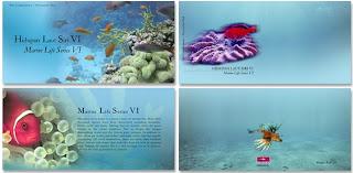 Marine Life Presentation Pack
