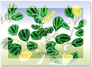 Medicinal Plants Miniature Sheet