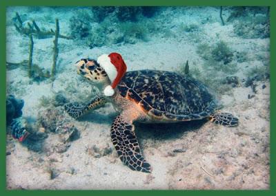Santa Sea Turtle