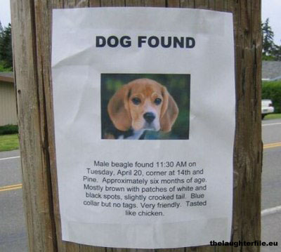 Funny Picture Image - Lost Dog Found