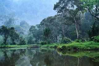 Hasil gambar untuk hutan wisata baning