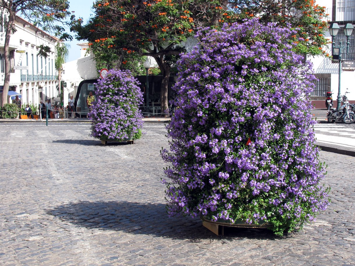 flowers in City Hall of Funchal