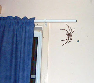 huntman spider on wall