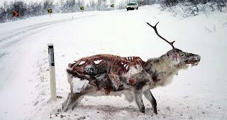 reindeer frozen to death