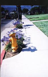 Even the fire hydrants in Santa Barbara