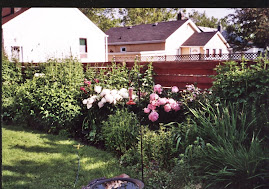 Peonies in the Perennial Bed