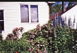 King Arthur Delphiniums, Explorer Roses