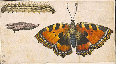 Orange and black butterfly, caterpillar, and pupa