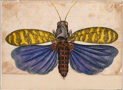 yellow and purple locust
