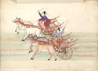 Bullock cart race