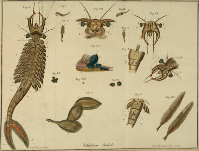 18th century insect illustrations