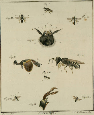 coloured engravings of insects