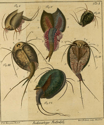 historic schaeffer insect engravings