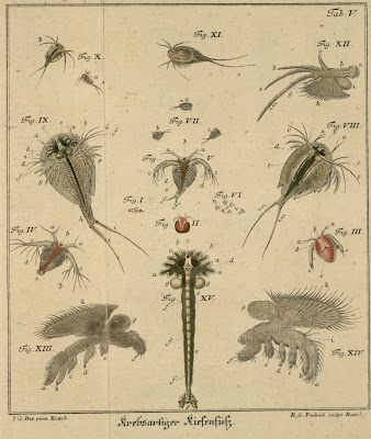insect engravings