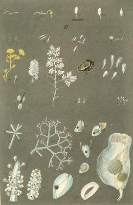 Zoologica phytozoa
