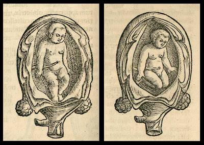babies in-utero