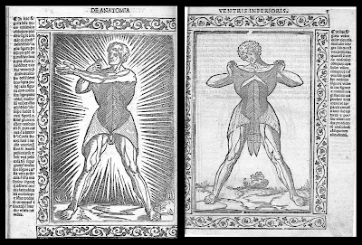 Berengario - woodcuts of human anatomy