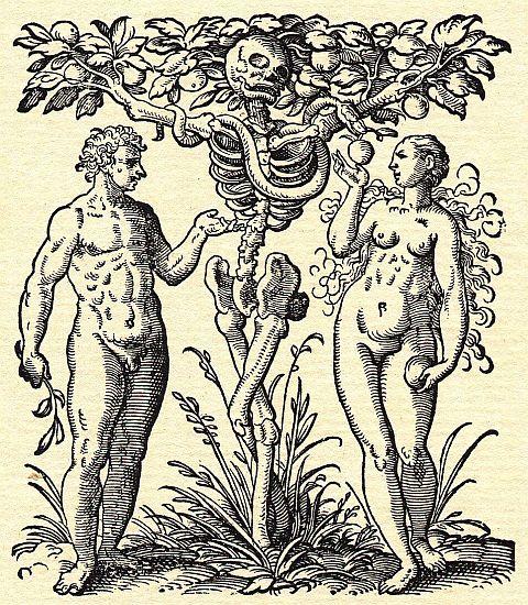 [Jacob+Rueff+-+De+conceptu+et+generatione+hominis+-+1554+z.jpg]
