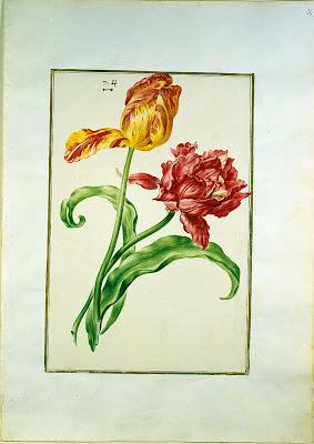 Karlsruher Tulpenbuch
