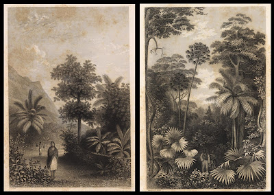 Tahiti jungle scenes - 1845 USA expedition