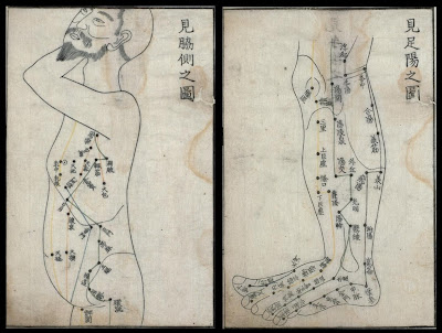 torso and leg acupuncture maps
