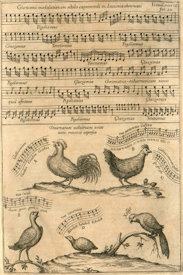 birdsong as musical scores