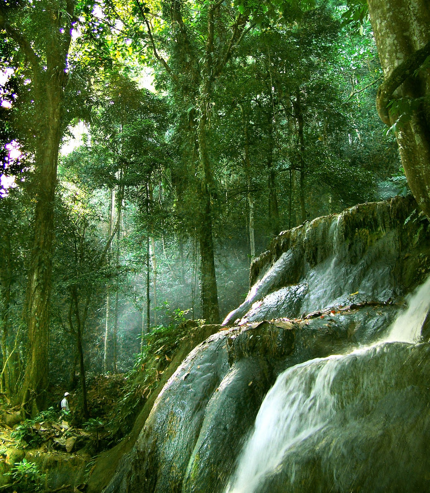 55 Gambar Pemandangan Hutan Untuk Diwarnai HD