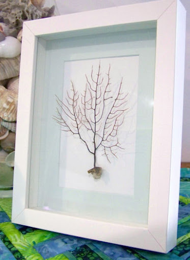 sea fan framed in shadow box