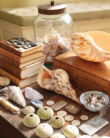 seashell collection displayed on table