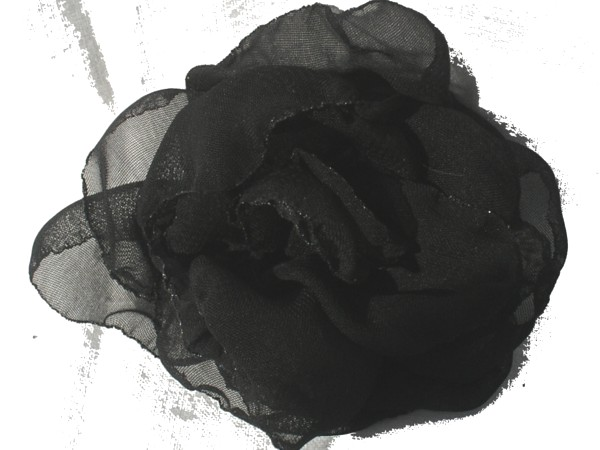 Rosa de gaza negra.