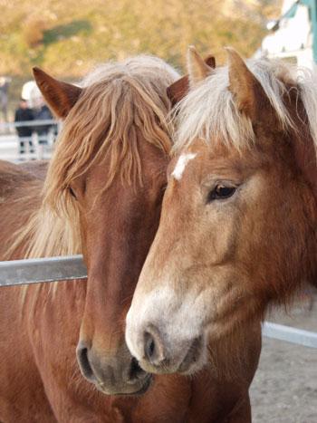 Cavallos Los Cavallos