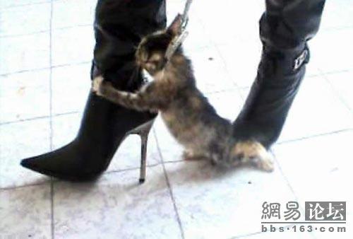 Pantyhose and high heel lovers