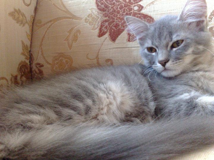 Of Animal Love: Adopt a Cat - Islamabad/Rawalpindi