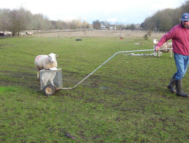 Lamb cart