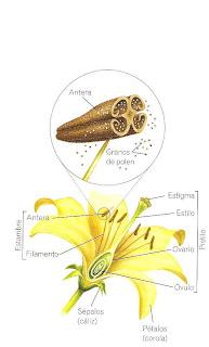 Reproduccion asexual de las plantas por hojas de parra